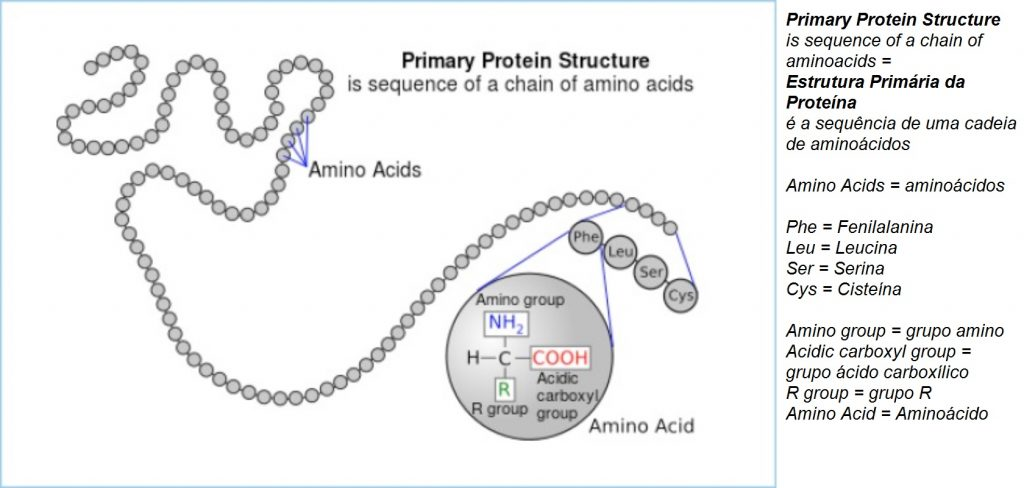 Figura 1: Estrutura primária da proteína